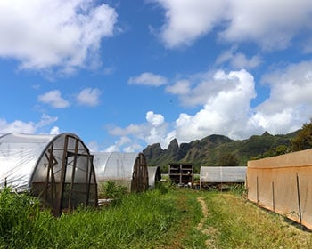 Organic Farming on Kauai