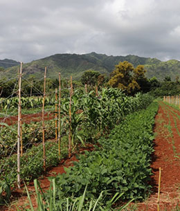 Organic Farmers on Kauai