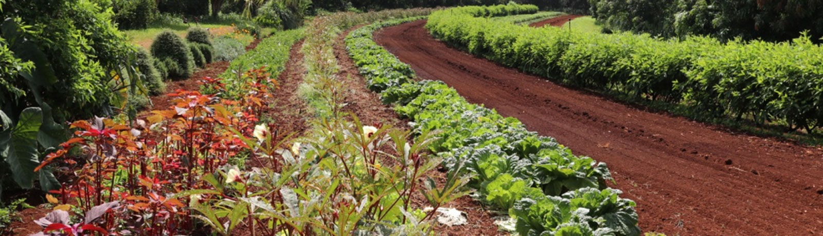 Organic Farmers Produce at Hoku Foods Kapaa